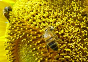Honey and Organic Fair